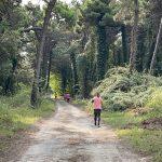 Il passaggio dentro la Pineta di Lignano Sabbiadoro
